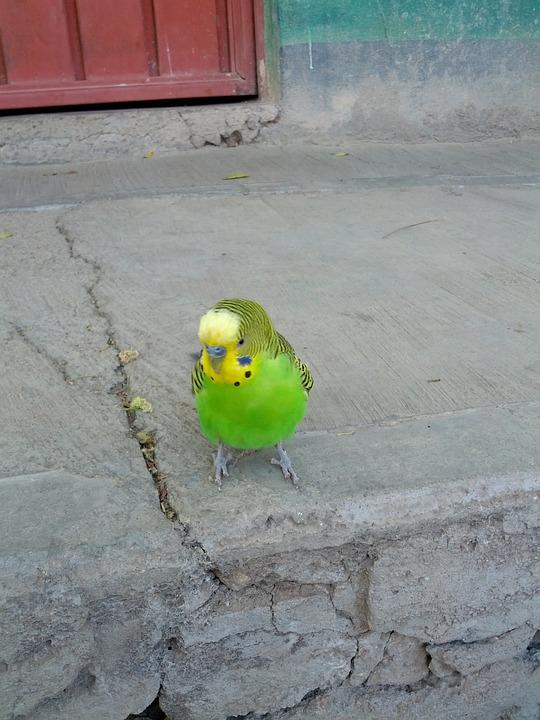 parrot-439807_960_720