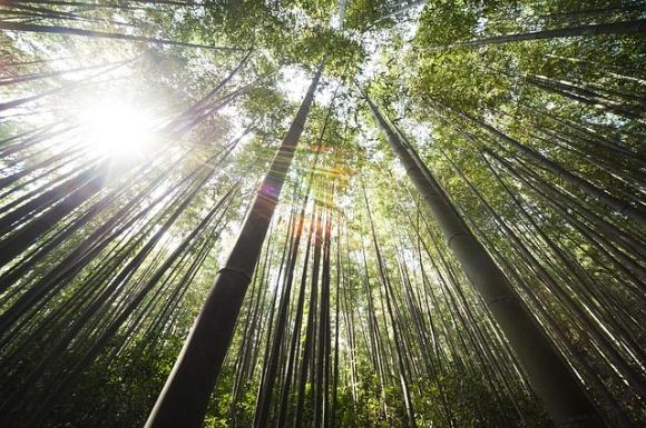 bamboo-364112_640.jpg